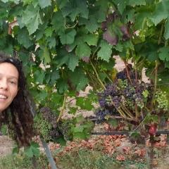 Foto de Begoña M., Jardineros baratos en Santorcaz